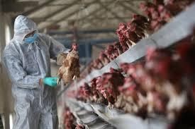 Çin'de kuş gribinin H10N3 türüne ilk defa bir insanda rastlandı