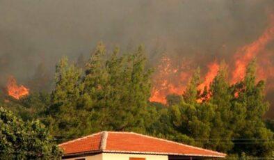 Türkiye'yi küle çeviren orman yangınları neden çıktı?